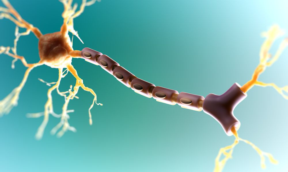 Targeting Myelin Repair as Treatment for MS