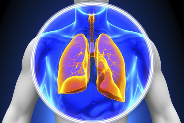diagram of the lungs, a tumor may be different types of lung cancer