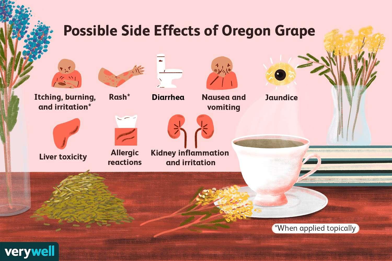 Possible Side Effects of Oregon Grape