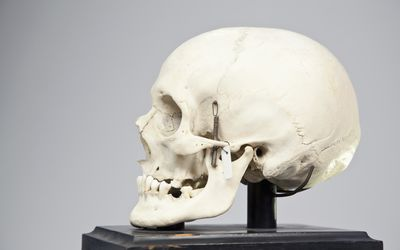 Side view of a human skull - stock photo