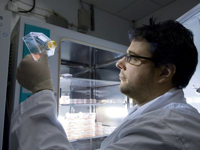 scientist doing Stem cell research