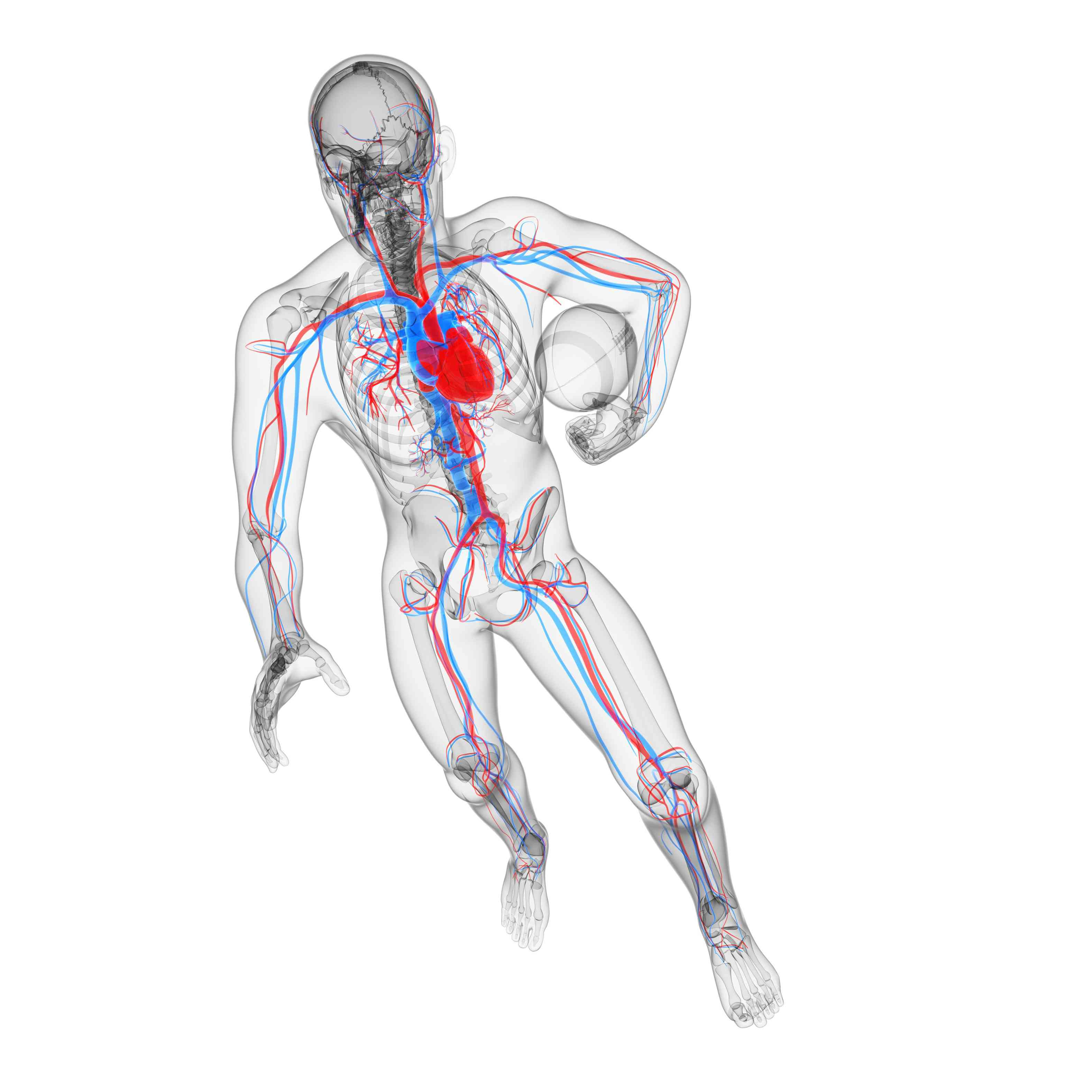 athlete blood vessels