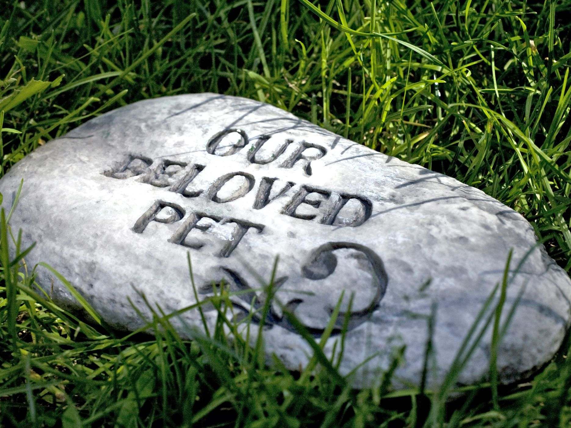 10 Ways to Memorialize Your Deceased Pet
