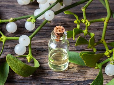 Mistletoe leaves, stems, berries, and extract