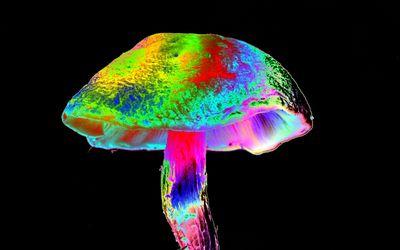 Magic mushroom illustration.