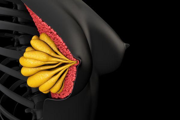 breast diagram