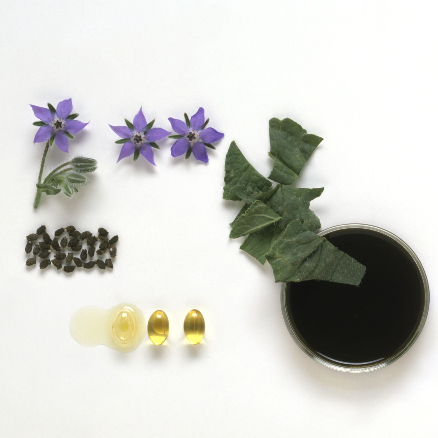 Borage Oil: Benefits, Side Effects, Dosage, and Interactions