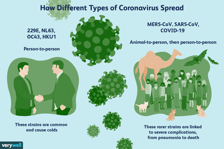 coronavirus types