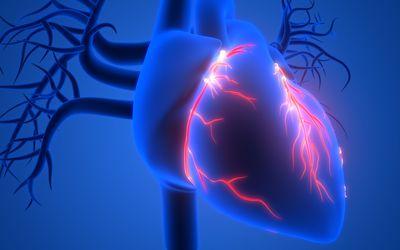 Human Internal Organ of Heart with Circulatory System Anatomy X-ray 3D rendering