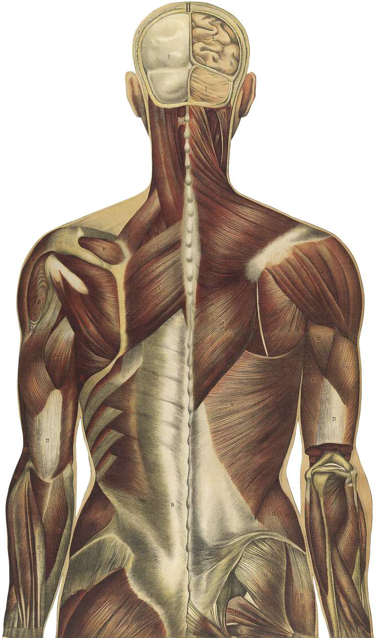 Thoracolumbar Fascia And Your Low Back Pain