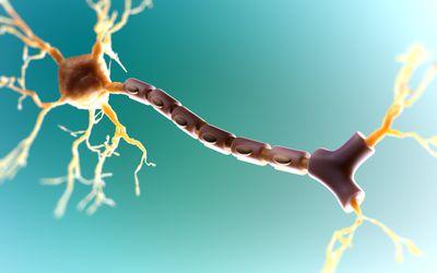 Targeting Myelin Repair as Treatment for MS