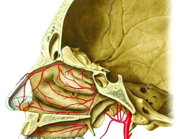 Sphenopalatine artery