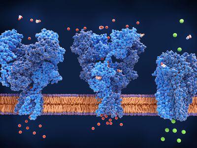 NMDA, AMPA and GABA receptors