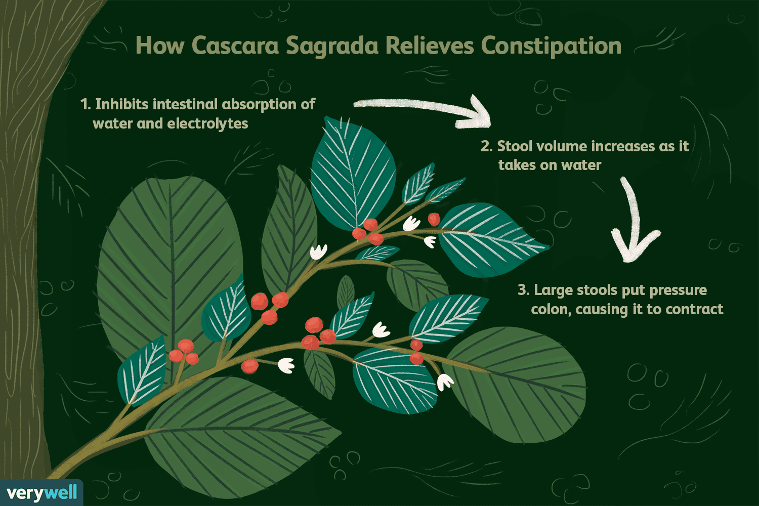 Cascara Sagrada: Benefits, Side Effects, Dosage, and Interactions