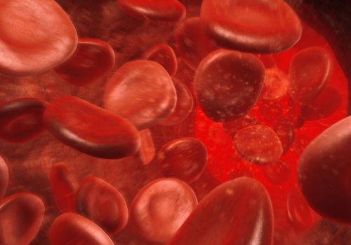 Red blood cells inside a blood vessel